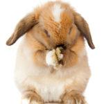Easter Bunny - Sanford